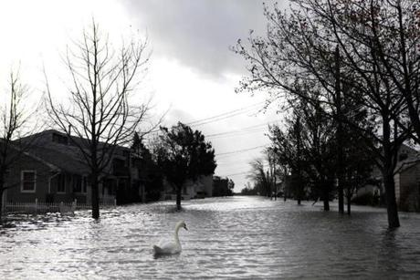 A swan made its way down a flooded street in Lindenhurst, N.Y.