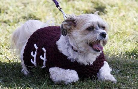A dog showed support for West Bridgewater during the game.