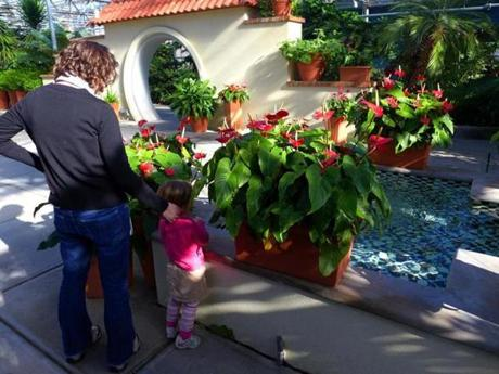 A family admired the flamingo lilies.
