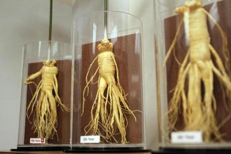 Examples of the ginseng at different growth stages.