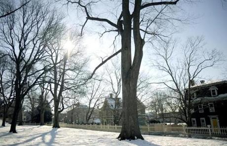 A 108-year-old elm tree on the property of the John Brown House Museum seen Jan. 5, 2013.