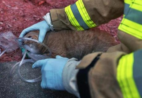 A Boston EMT gave oxygen to Rosie after she was overcome by smoke.