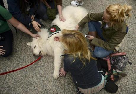 Visitors at the memorial received some pet therapy from Duffy, a great Pyrenees from the Pets & People and Dog Bones associations.