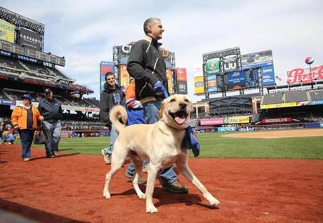 Fans walked their dogs around Citi Field before a Mets-Nationals game on April 20.