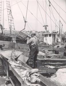 Unloading the catch in Gloucester in 1966.