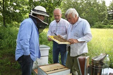 Alex Lu, Dick Callahan, and Ken Warchol open a hive in Northbridge, where they are studying the effects of pesticide exposure on honeybees.