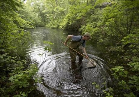 Matt Burne checks his net for evidence that a Middlesex Fells pond is a vernal one.