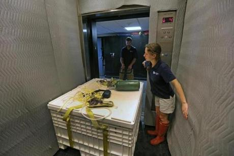 Intern Genevieve Resnick and staff member Chris Bauernfeind transported fish in a container through the aquarium's hallways and elevator.
