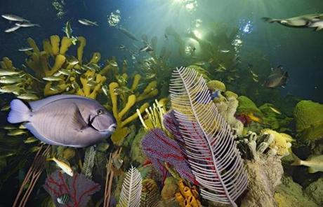 New England Aquarium - New Giant Ocean Tank