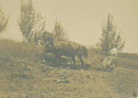 Almanzo Wilder with Buck and Billy making hay.