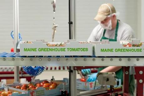 The business model is appetizing: Greenhouse tomatoes grow faster and yield far bigger harvests than field-grown ones.