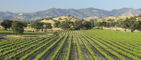 A Santa Barbara vineyard.