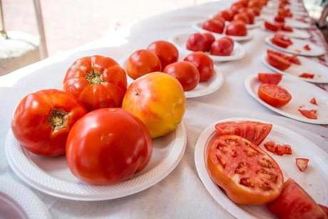 Entries lined up in their categories for sampling at the 29th Massachusetts Tomato Contest at City Hall Plaza.