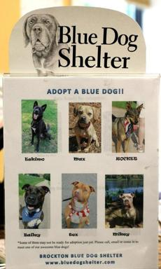 Blue Dog is a no-kill shelter for abandoned or abused dogs.
