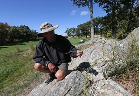 Black Rock Country Club course superintendent Chuck Welch checks one of the few remaining brambles near the 14th green after a Goatscaping Co. crew cleared a densely covered area that claimed many an errant shot.