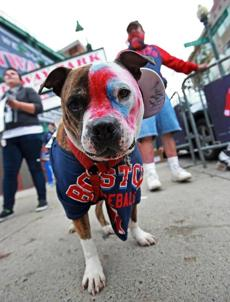 Outside of Fenway Park before the game, Bob Johnson (rear) and his dog Busta were dressed for the occasion.