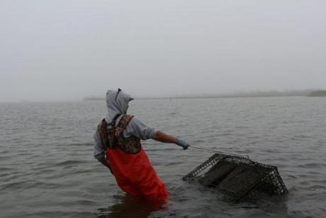 Jules Opton-Himmel of Walrus and Carpenter Oysters in Ninigret, R.I., pulls an oyster cage out of the ocean.