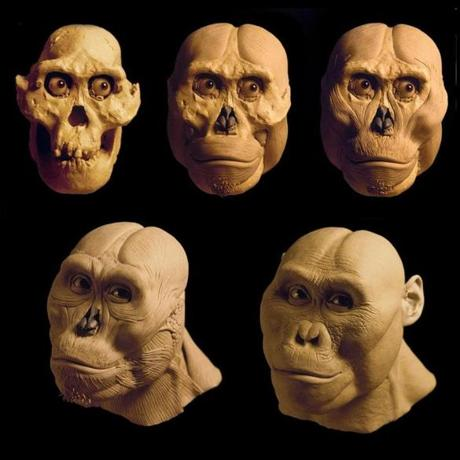 The reconstruction stages of the head.