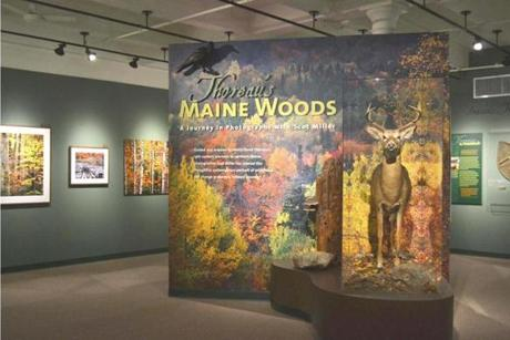 """Thoreau's Maine Woods: A Journey in Photographs With Scot Miller"" is on display at the Harvard Museum of Natural history."
