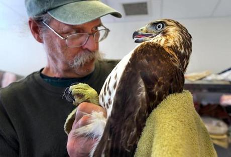 Dr. Greg Mertz is chief executive of the New England Wildlife Center in Weymouth.