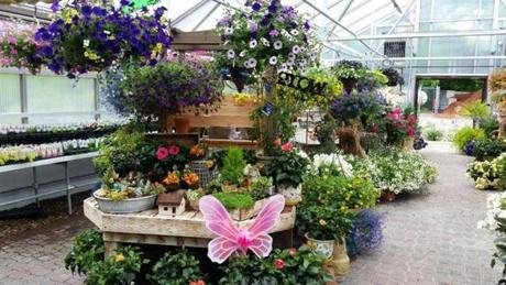 Charmant Fairy Garden Supplies And Hanging Baskets Can Be Found At Spillaneu0027s Nursery  And Landscape In Middleborough