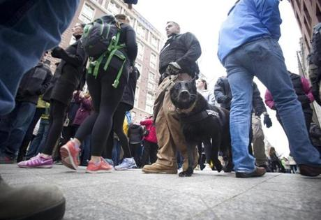 4/20/2015 - Boston, MA - Boylston Street - Explosive-sniffing dogs walked with their handlers up and down Boylston Street. Spectators lined the Boylston Street in Boston, near the finish of the 119th Boston Marathon on Monday, April 20, 2015. Topic: Race coverage. Photo by Dina Rudick/Globe Staff.