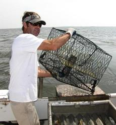 Marc Mitchum hoists a crab trap on his charter boat off Wanchese, N.C., and holds a female crab (with her red claws).
