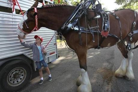 Liberty Pongratz, 9, of Pembroke, pet one of the Clydesdales,