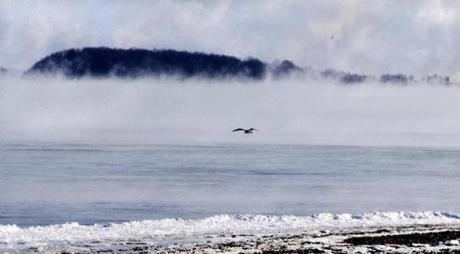 A sea gull was the only sign of life at Wollaston Beach early Sunday morning.