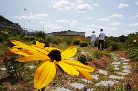Northampton, MA - 7/20/2016 - Inmates walk the Labyrinth, a path that weaves through a flower garden out in the yard that the inmates take care of and use for meditation that was put in under Sheriff Bob Garvey at the Hampshire County Jail and House of Corrections in Northampton, MA, July 20, 2016. (Jessica Rinaldi/Globe Staff) Topic: 081416SheriffGarvey