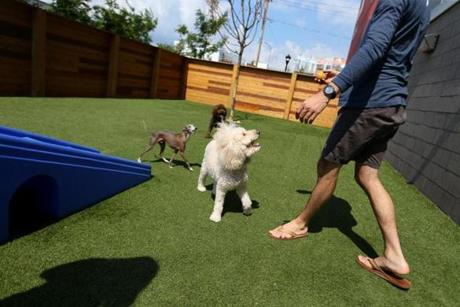 The day-care center for dogs features indoor and outdoor play space and grooming options.