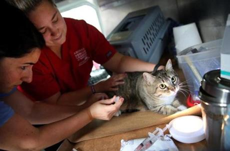 Nicole Breda (left) and Bonnie Morrissey of the Animal Rescue League vaccinated a cat named Minaj
