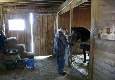 MacAdams put a halter on Waco as he prepared to take him out to a snow-covered paddock.