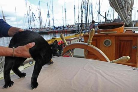 BOSTON, MA - 6/20/2017:TALL SHIPS.... Lee Loo the cat on the Lynx ship at Fan Pier .(David L Ryan/Globe Staff ) SECTION: METRO TOPIC 21tallshipcats